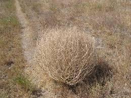 *tumbleweed*